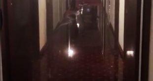 В иерусалимском отеле «наводнение» | Nashe.Orbita.co.il