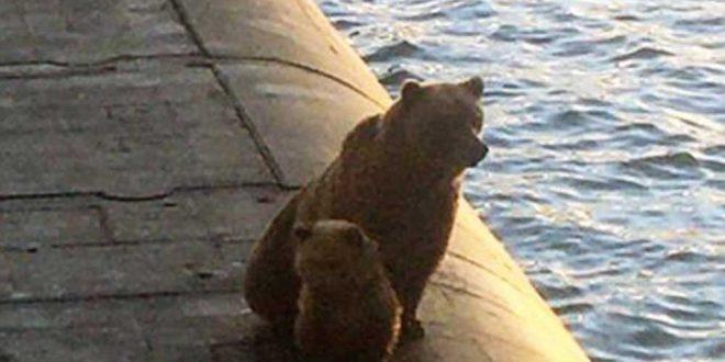 Доблестные русские моряки убили забравшихся на подлодку медведицу с детенышем