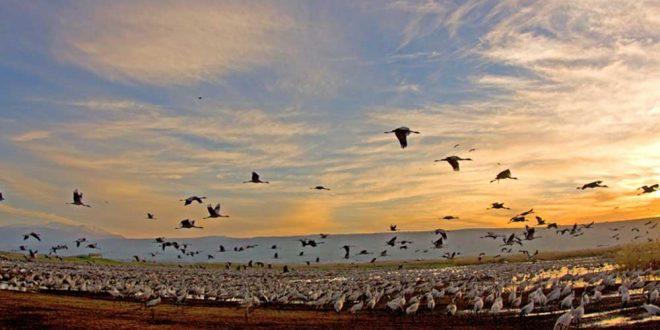 в Израиле начинается сезон перелетных птиц