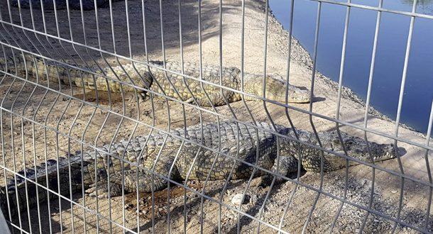 Беер-Шева: врачи борются за руку ребенка, на которого напал крокодил